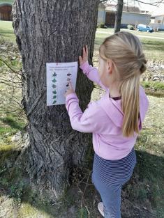 Strom Kraslicovník